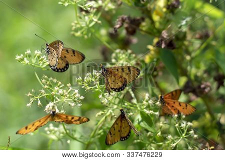 A Group Of Butterflies Eating Pollen In The Morning