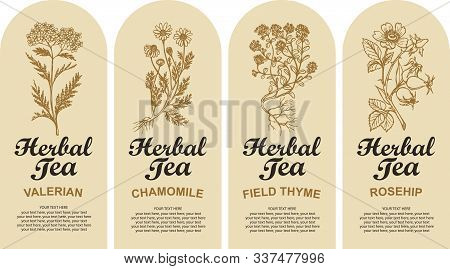 Set Of Four Vector Labels For Various Herbal Tea Decorated By Hand-drawn Herbs And Calligraphic Insc