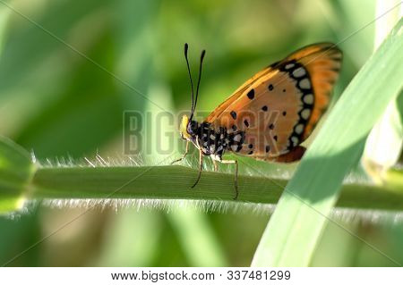 Butterfly Perched On The Green Grass In The Morning