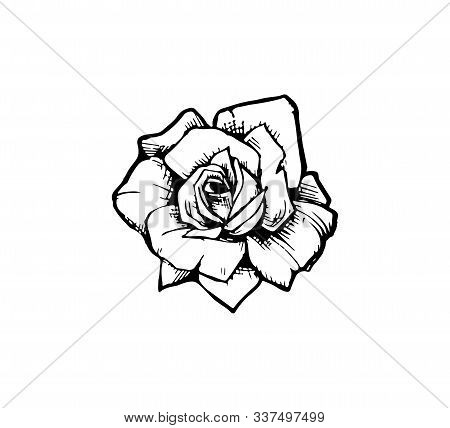 Vector Illustration Of A Rose Flower Closeup Isolated. Stylish Idea For A Tattoo - Old School Rose