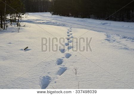 Footprints On White Snow In A Forest. Snowy And Impassable Road With Deep Snow In Winter. Snowdrift,