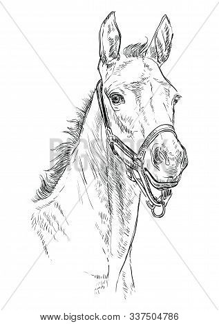Foal Portrait With Halter. Horse Head In Black Color Isolated On White Background. Vector Hand Drawi