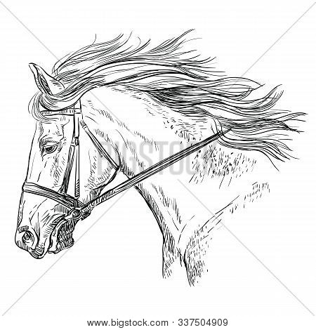 Horse Portrait With Bridle. Beautiful Horse Head With Long Mane In Profile In Black Color Isolated O
