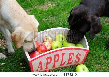 Inquisitive Puppies
