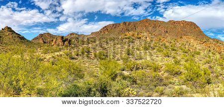 Saguaro National Park Located In Tucson, Arizona Usa.
