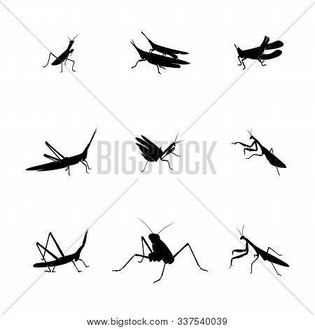 Set Of Grasshopper Logo Design Vector Illustration. Grasshopper Design Template