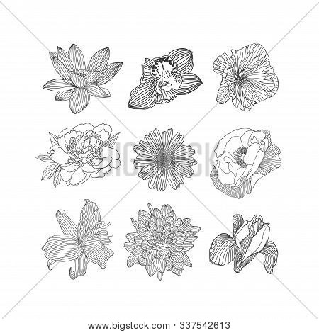 Set Of Nine Different Vector Flowers. Linear Hand Drawn Lotus, Orchid, Mallow, Peony, Chamomile, Pop