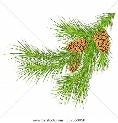 Christmas Decoration Pine Cone  And Fir Tree Branches .eps 10 Fir Branch. Christmas Tree Branches Wi