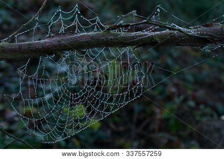 Spider Web Closeup Forrest Wet Pretty Green