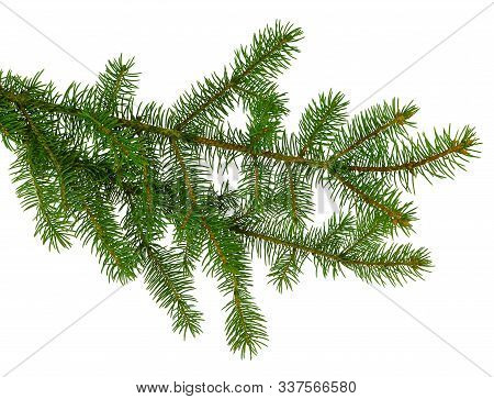 Spruce, Fir, Pine Or Christmas Tree Branches . Coniferous Branches Isolated On White Background. New