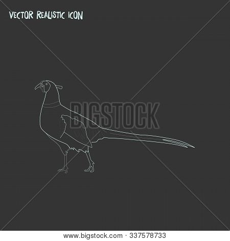 Pheasant Icon Line Element. Vector Illustration Of Pheasant Icon Line Isolated On Clean Background F