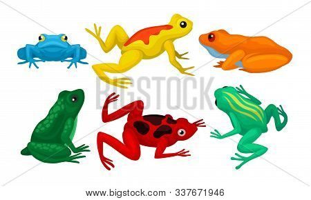 Frogs Collection, Cute Amphibian Animals Of Different Colors Vector Illustration
