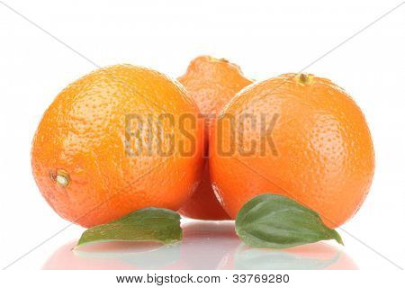 mineola fruits with leafs  isolated on white