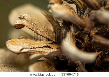 Pine Cone. Details Of A Pine Cone. Christmas Background. Closeup Of A Pine Cone. Natural Background.