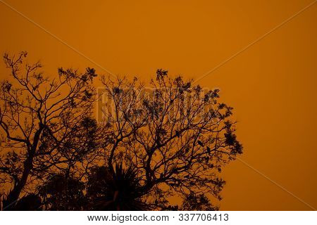 Australian Bushfire: Trees Silhouettes And Smoke From Bushfires Covers The Sky And Glowing Sun Barel