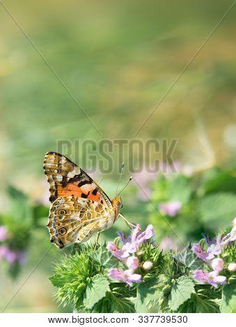 Beautiful Summer Butterfly Sitting On A Flower.