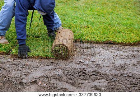 Applying Turf Unrolling Green Lawn Grass New Grass Roll
