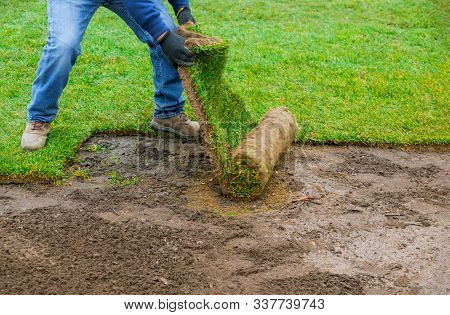 Landscaping Laying New Sod In A Backyard Green Lawn Grass In Rolls