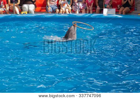 Performance Of Trained Dolphins At A Show In The Dolphinarium, Aquarium. Cute Dolphins Dive And Show