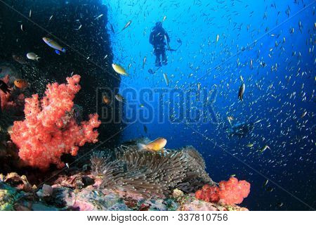 Scuba dive underwater coral reef