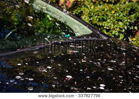 Loads Of Bird Poop On Top Of The Car. Dark Hood Of The Car And Front Window With Lot Of Bird Droppin