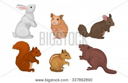 Wild Rodent Animals Set, Chipmunk, Chinchilla, Hamster, Squirrel, Rabbit, Cavy Vector Illustration