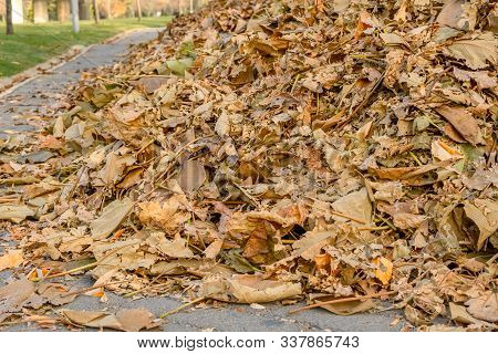 Close Up Of A Pile Of Fallen Autumn Leaves On Paved Road In A Park.