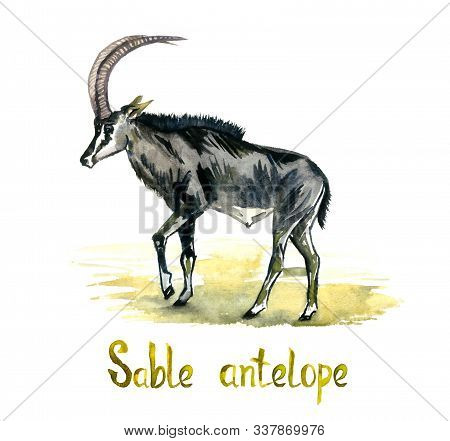 Sable Antelope, Handpainted Watercolor Illustration Isolated On White, Element For Design