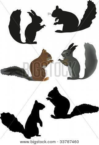 illustration with six squirrels isolated on white background