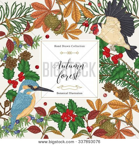 Vintage Card With Birds And Trees. Kingfisher And Finch Birds In The Forest. Hand Drawn Vector Illus