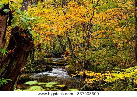 View Of Oirase Mountain Stream Flow In The Colorful Foliage Forest In Autumn Season At Oirase Stream
