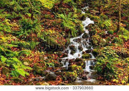 Small Natural Stream Flow Down From The Mountain Passing Rocks On The Ground That Covered With Color