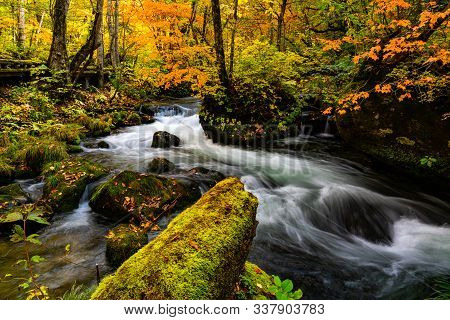 View Of Oirase River Flow Along The Oirase Walking Trail Passing The Colorful Forest Of Autumn Seaso