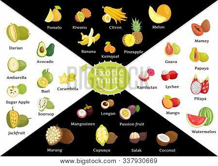 Tropical Fruits Vector, Kiwano And Avocado, Durian And Kumquat. Rambutan And Mangosteen, Marang And