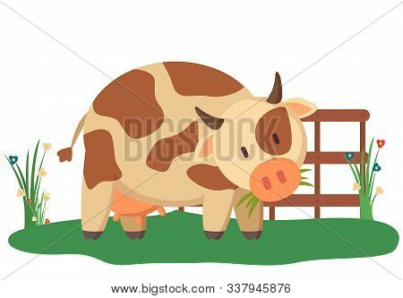Spotted Cow Near Fence And Green Bushes Domesticated Rustic Animal With Horns. Vector Young Bovine C