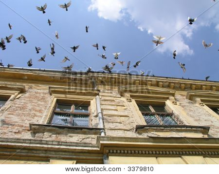 Flock of doves in flight to blue sky. poster