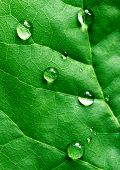 close up water drops on green leaf poster