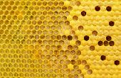How bees multiply and are born. Stages of development of bee larvae. Bees Broods. poster