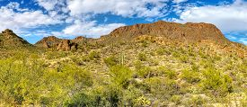 Saguaro National Park Located In Tucson, Arizona Usa.