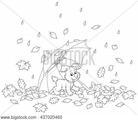 Merry Little Pup Under A Toy Umbrella Among Fallen Autumn Leaves In A Park On A Rainy Day, Black And