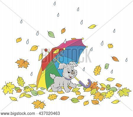 Merry Little Pup Under A Colorful Toy Umbrella Among Fallen Autumn Leaves In A Park On A Rainy Day,