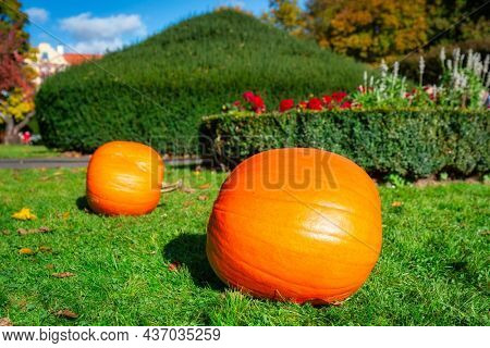 Beautiful autumn park with pumpkins arranged on the lawn