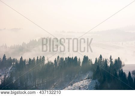 Morning Mist In Wintertime. Coniferous Forest On The Rolling Hills In Fog. Gorgeous Nature Scenery A