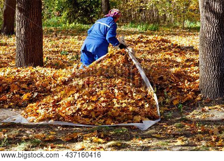 A Utility Worker In A Blue Overalls Gathers Fallen Orange Leaves In A Pile Among The Powerful Tree T
