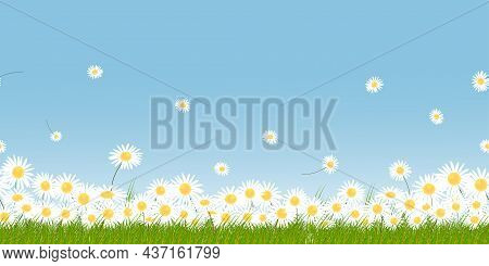 Seamless Pattern White Daisy With Green Field And Blue Sky On Springtime Background.vector Endless S