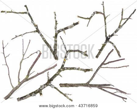 Old Apple And Cherries Tree Branches Isolated