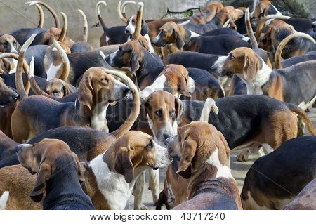 Hunter Hounds Dogs Background