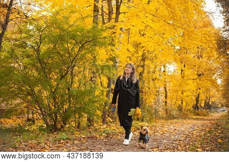 A Beautiful Woman In A Black Coat And White Sneakers Walks Through The Autumn Park With A Small York