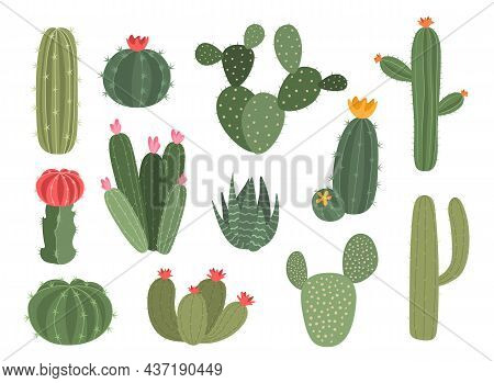 Cute Cactus. Cartoon Collection Of Decorative Succulent. Home Green Plant With Blossom. Desert Exoti