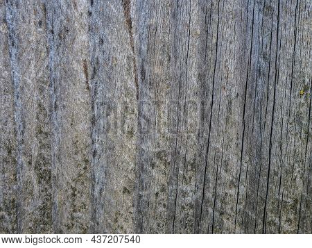 Old, Aged, Weathered Pine Wood Board Close Up Shot For